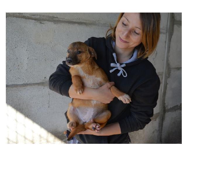 Cyrilla cucciolina 3 mesi taglia piccola 0
