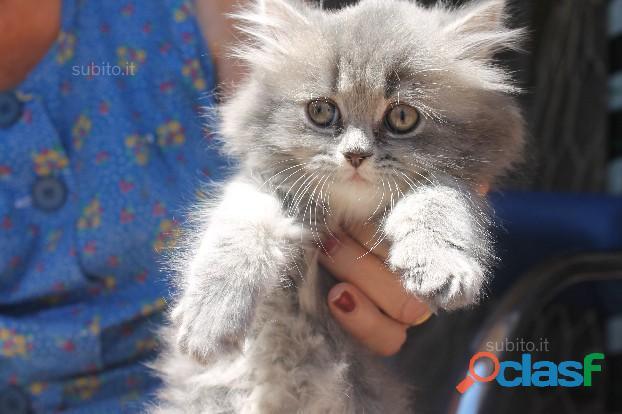 Cat sitter/pensione gatti