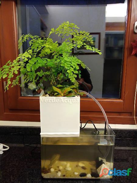 Kit acquario acquaponico ad uso domestico