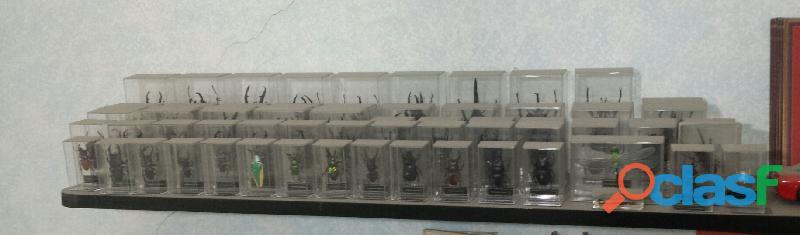 Collezione completa insetti da tutto il mondo