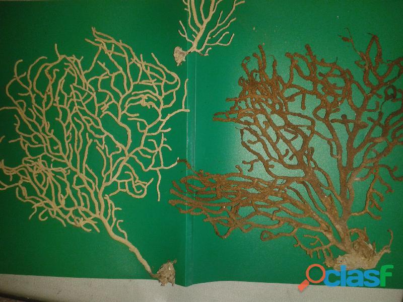 conchiglie e formazioni coralline 1