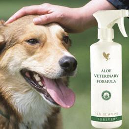 Aloe vera prodotti per la cura dei nostri amici animali