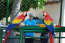 Regalo Grandi pappagalli ara macao