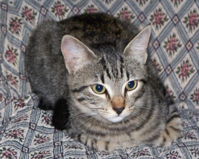 Servizio amatoriale pensione per gatti e conigli