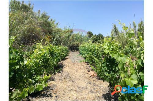 Terreno agricolo coltivato a frutteto e vigneto