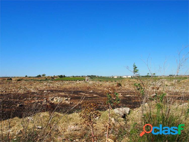 Terreno agricolo di 9.080mq fronte strada