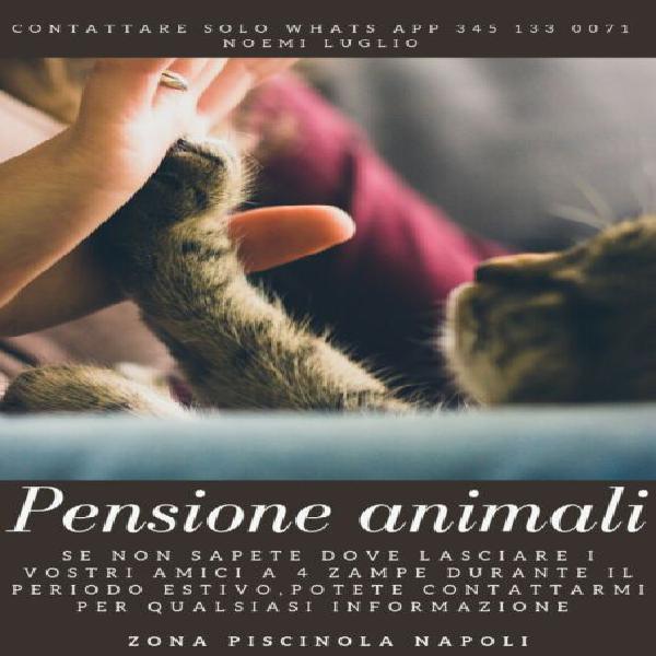 Pensione animali 24h su 24h tutto l'anno