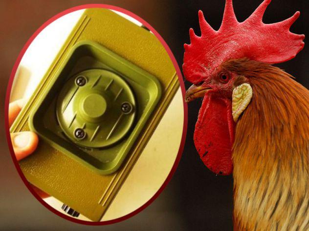 Lettore mp3 professionale richiamo elettronico uccelli