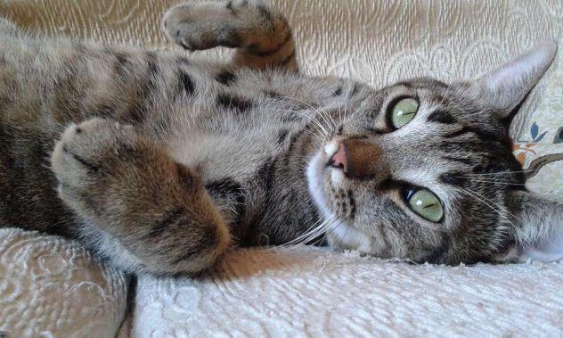 Cat sitter bologna centro - referenziata e professionale