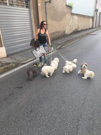 Dog sitter, pensioni casalinghe monza e brianza