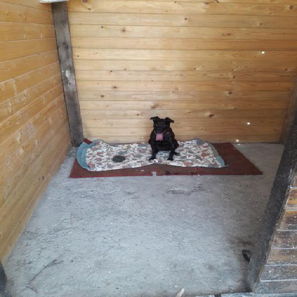 Pensione per animali cani gatti ed altri piccoli e grandi