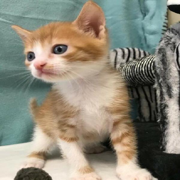 Gattini maschietto e femminuccia 3 mesi