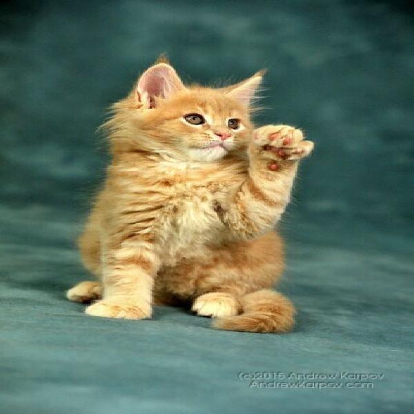 Servizio di pensione casalinga per i vostri amici gatti