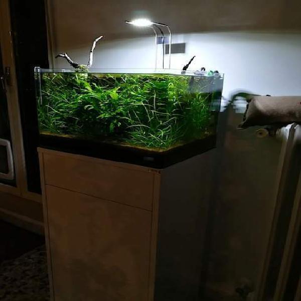 Grazioso acquario scapers'tank dennerle 50 lt