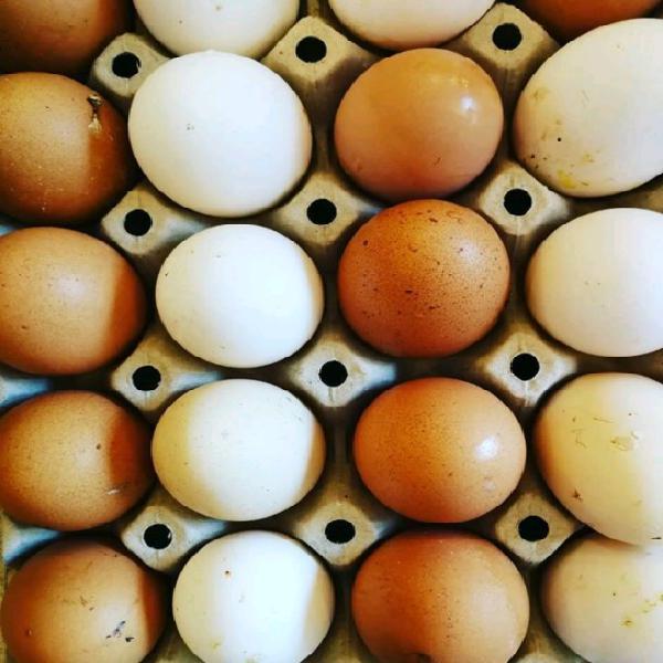Uova allevamento biologico di casada