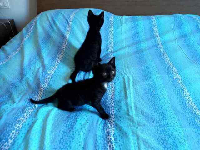 2 meravigliosi gattini in cerca di casa