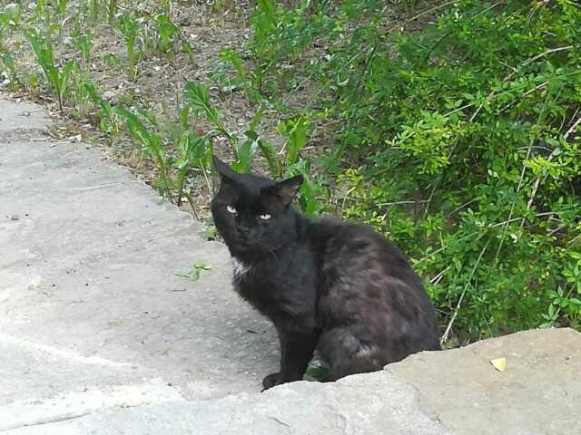 Ranuncolo, gatto nero abbandonato cerca una casa