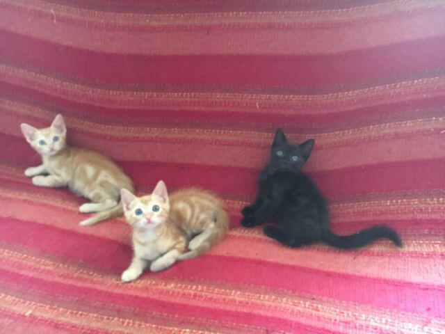 Regalo gattini nati in casa