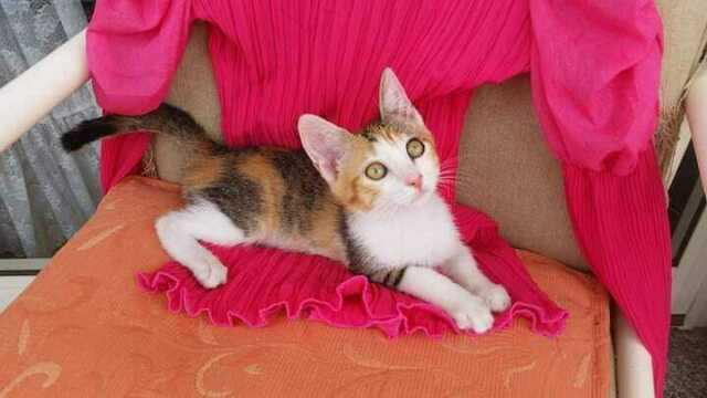 Dolce gattina in adozione