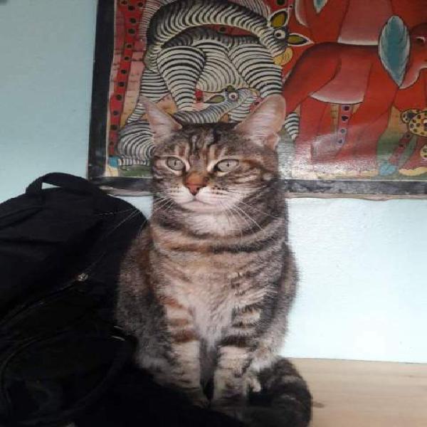 Acidina bellissima gatta lunatica