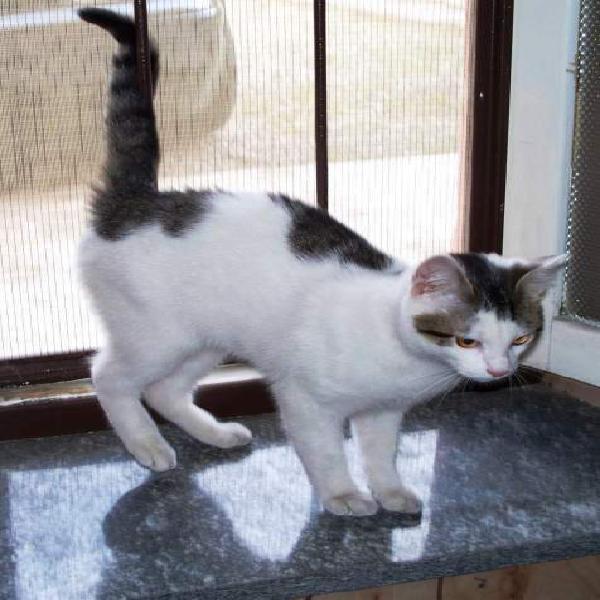 Medico veterinario offre servizio pensione per gatti
