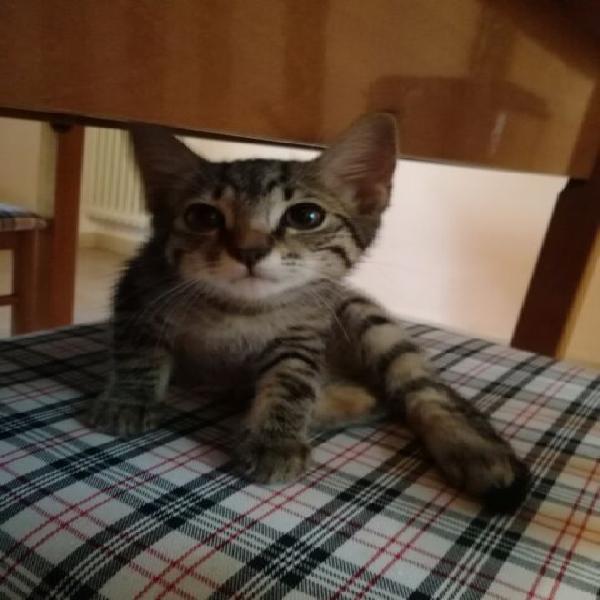 Gattina adozione urgentemente