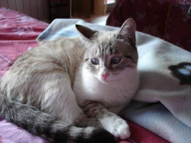 Pet sitter: mi occupo con passione e serietà di animali