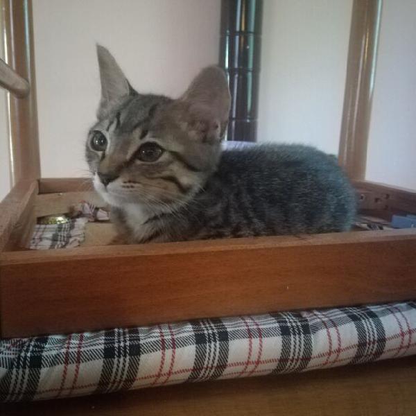 Gattina cucciola
