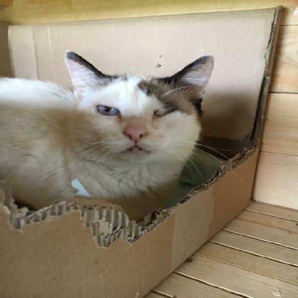 Regalo gattina adozione del cuore