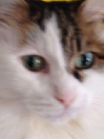 Cat sitter pluriennale esperienza referenziata bologna
