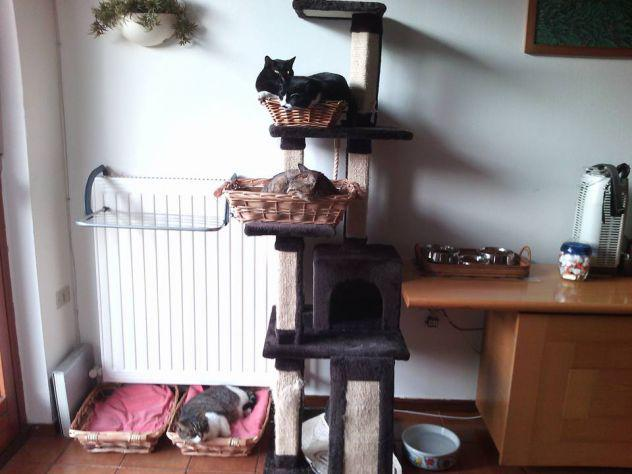 Pet- sitter milano v giornate dog/cat sitter