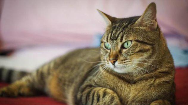 Catsitter per il vostro micio in città - agosto