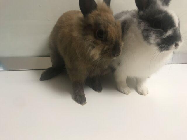 Regalo due conigli con accessori compresi