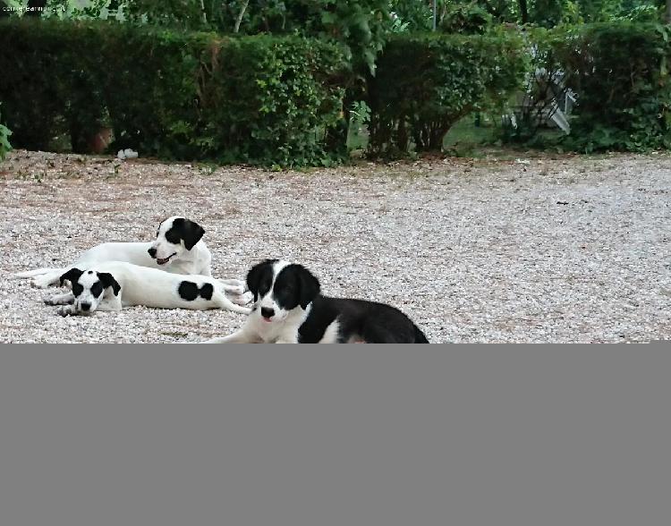 cuccioli cane