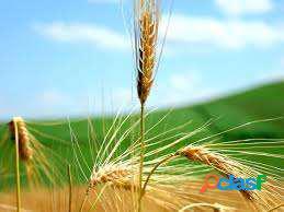 Terreni agricoli e terreno edificabile
