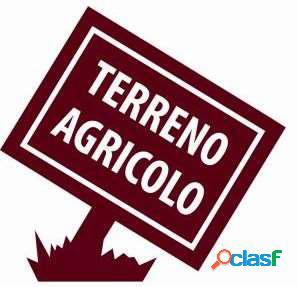 TERRENO AGRICOLO DI 6500 MQ CON ANNESSO