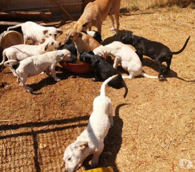 50 i cuccioli, in cerca di casa