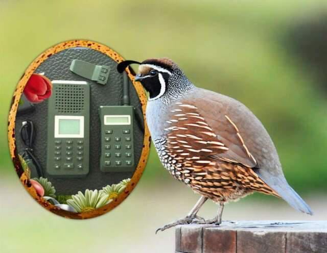 Richiamo CON telecomando e timer 150 CANTI