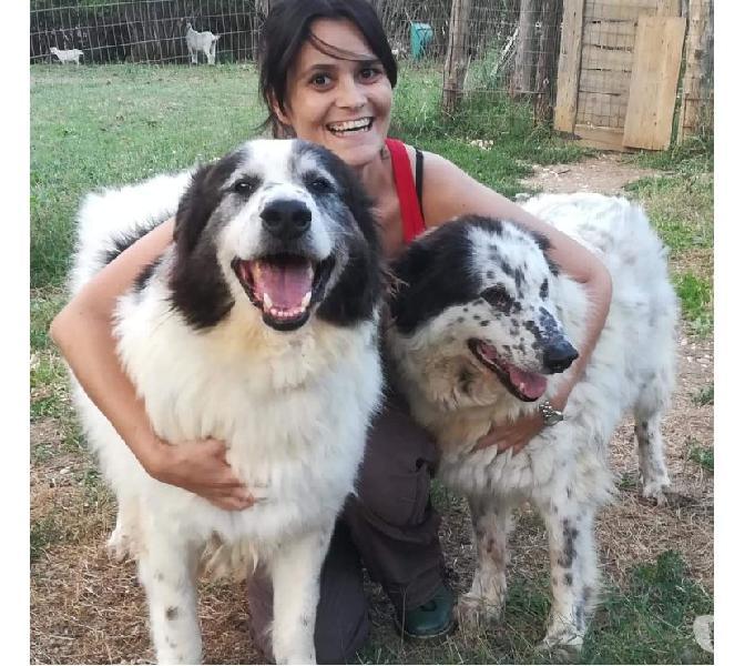 Simil pastori: i giganti buoni aspettano una super adozione!