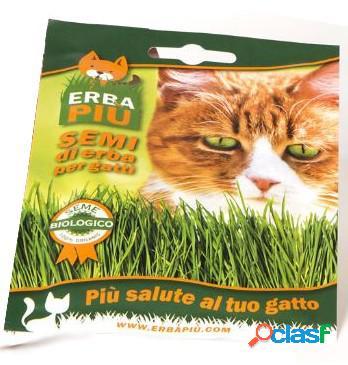 Erba felix seme in busta per gatti