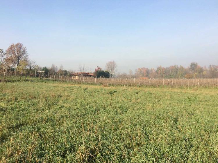Agricolo - Seminativo a Rovigo
