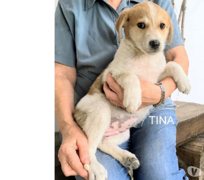 Tina, splendida cucciola mix labrador