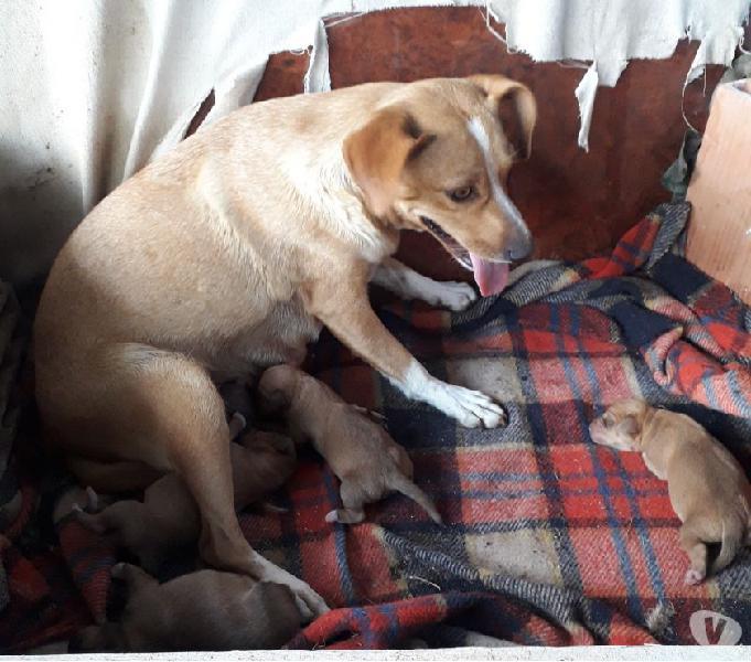 Regalo meravigliosi cuccioli