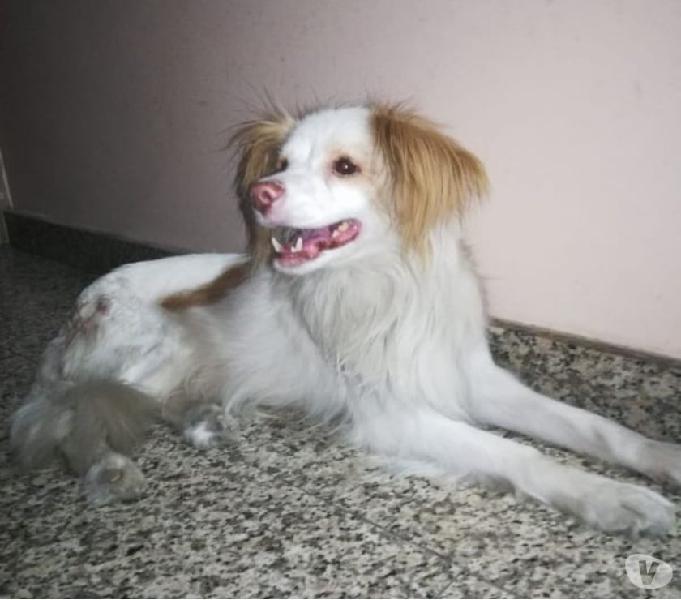Cani Di Piccola Taglia A Pelo Corto In Regalo.Regalo Cani Taglia Animali Gennaio Clasf