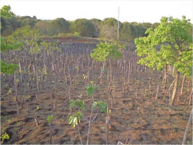 Professionale terreno coltivabile mq1778