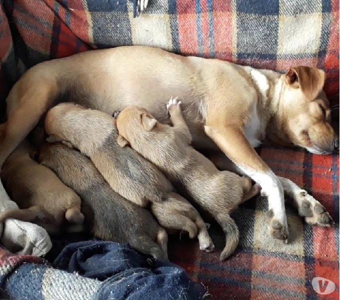 Regalo splendidi cuccioli