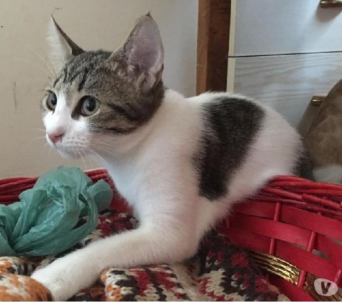 Gattina meravigliosa cerca casa