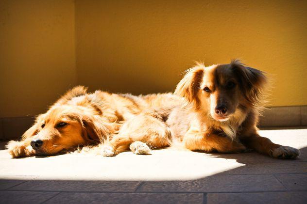 Pensione casalinga cani, gatti e altri animali
