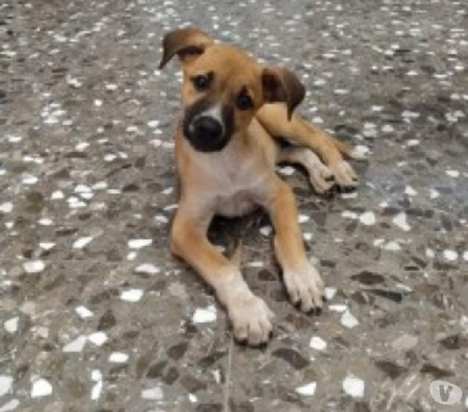 Chicco dolce cucciolo cerca casa