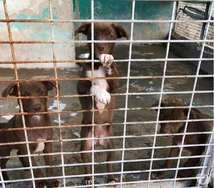 Cuccioli taglia medio piccola in canile